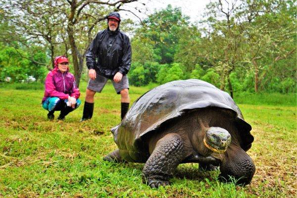seeing the galapagos giant tortoises