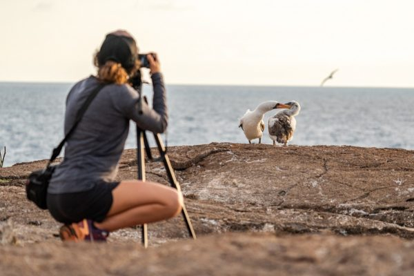galapagos the birdwatching and natural laboratory of the world