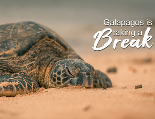 How Galapagos is dealing the COVID 19
