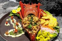 delightful galapagos lobster
