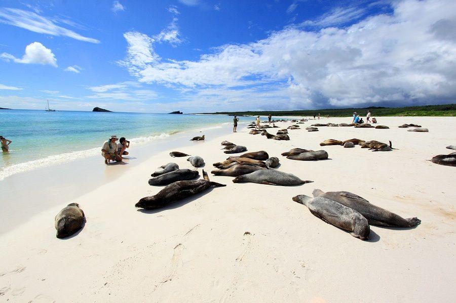 Sea lions of Galapagos