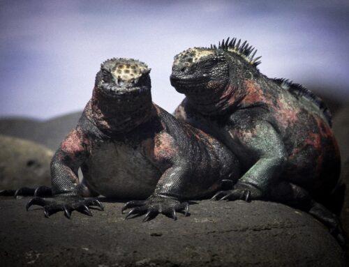 ¿Por qué recomendar visitar las Islas Galápagos?