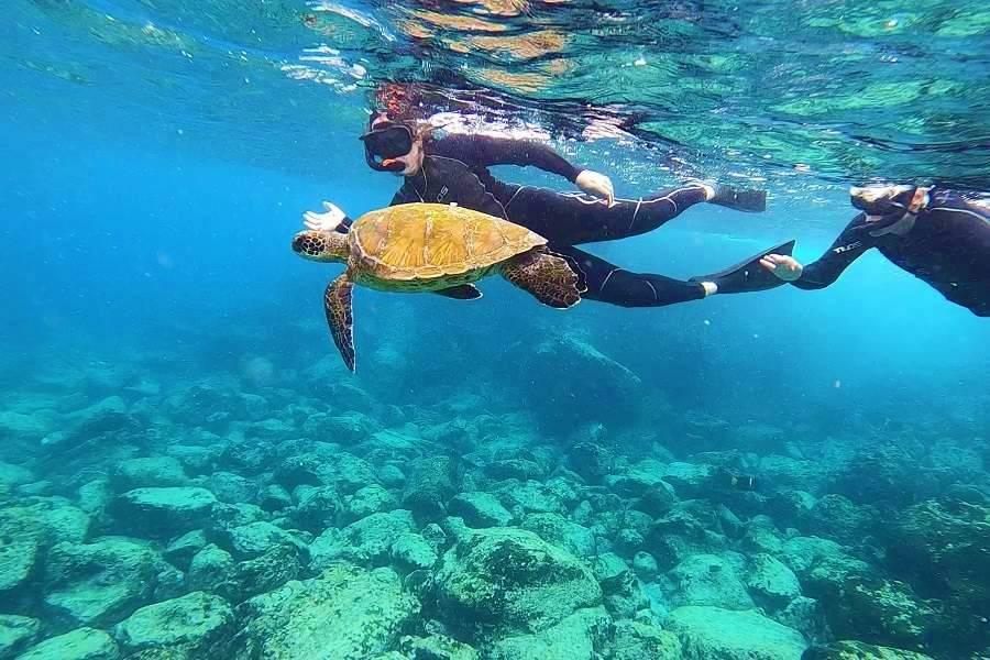 Snorkel en Galápagos con tortuga marina